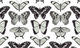 Eco wallpaper wall BUTTERFLY